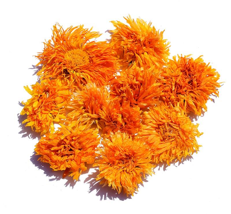 Marigold - Calendula