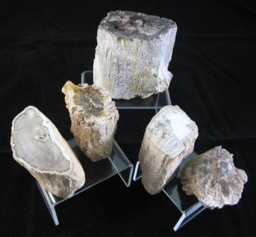 Petrified Wood Branches - Medium
