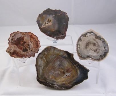 Petrified Wood Slabs - Small