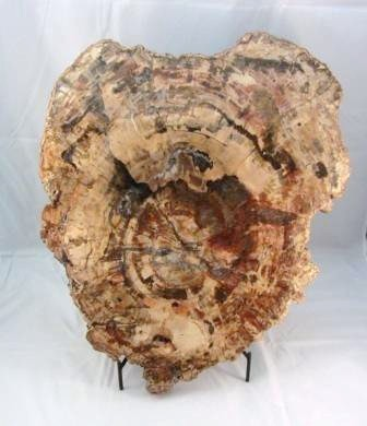 Petrified Wood Slab Extra Large