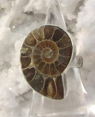 Ammonite Medium Brown Ring
