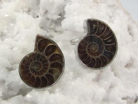 Ammonite Adjustable Rings
