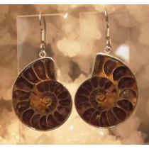 Ammonite Brown Tone Earring