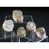 Petrified Wood Branches - Small