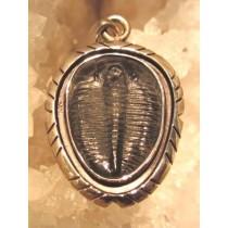 Trilobite Designer Pendant