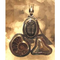 Ammonite, Trilobite and Shark Tooth Pendant by Charles Albert