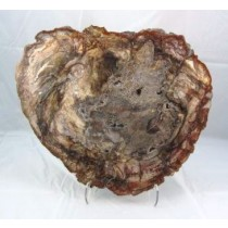 Petrified Wood Polished Slab Extra Large