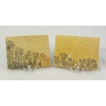 Dendrite Fossil Slabs