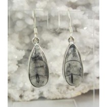 Orthoceras Teardrop Earrings