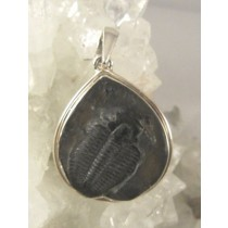Trilobite in Matrix Teardrop Pendant