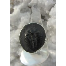 Trilobite in Matrix Ring