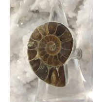 Ammonite Medium Brown Ring