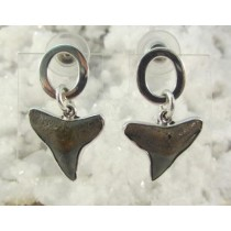 Fossil Shark Tooth Post Earrings By Charles Albert