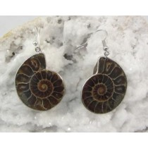 Ammonite Earrings in Stainless Steel