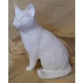 sitting cat 2