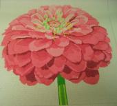 Regal Pink Zinnia