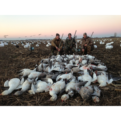 snow goose hunt l goose hunts l snow goose hunting