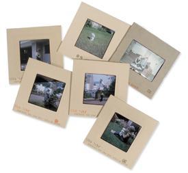 Slides and photos transfer per each.