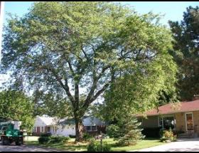 Tree Expert Tree Trimming Tree Pruning Tree Tree